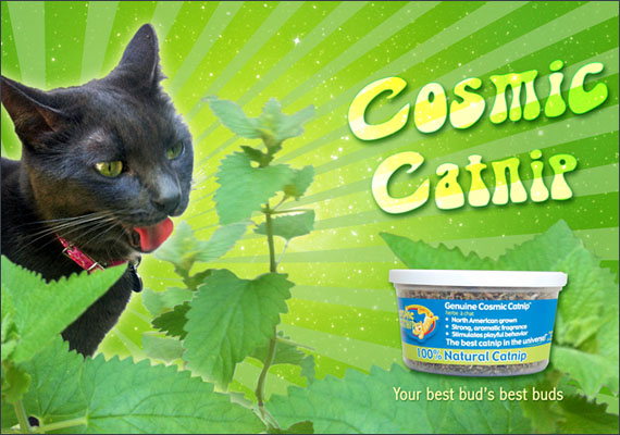 A personal project. I was inspired by a photo i took of my Cat ejoying catip on the patio, so I created a mock ad for Cosmic Catnip .